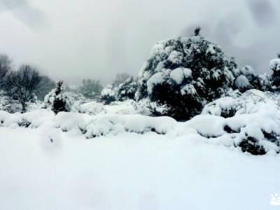 nieve, invierno, cañada; parque natural de sierra cebollera rutas para andar por madrid puebla de s